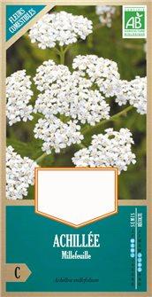 Organic achillea millefolium seeds