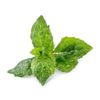 Spearmint Refill Ingot for Vegetable Garden